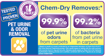Power Chem-Dry removes 99.9% of pet urine odors from carpets. Trust us to professionally clean and remove unwanted odors today!